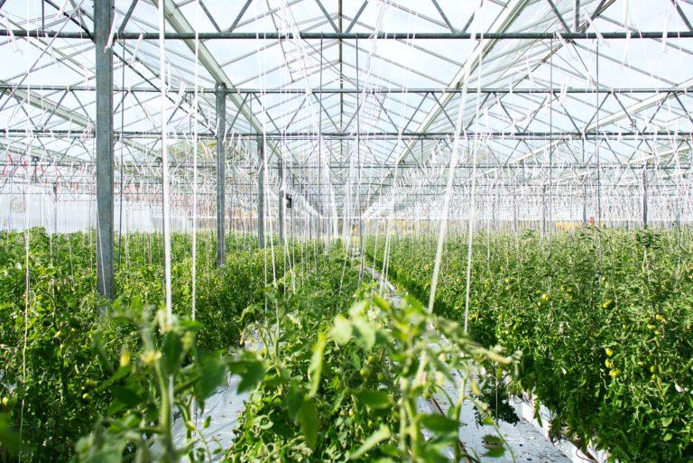 Horticulture textiles
