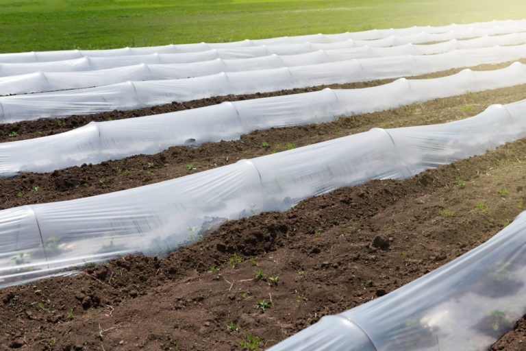 Low,Greenhouses,On,The,Ground,,Plastic,Film,,The,Cultivation,Of